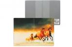 """Обложка для паспорта """"Лошади"""", кожзам, полноцветный рисунок, ДПС, 2203. Т9 оптом"""