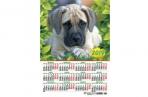 2019 Календарь-плакат А3 297*420 мм Собаки оптом