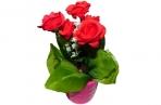 """Сувенир-растение 10311 """"Розы в горшке"""", 18х7см, пластик, асс 1 /0 /144 оптом"""